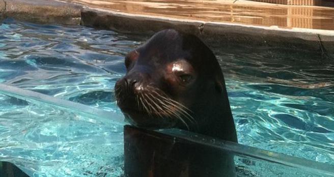 St. Louis Zoo Sea Lion Sound