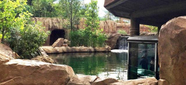 Hippo Cove at Cincinnati Zoo